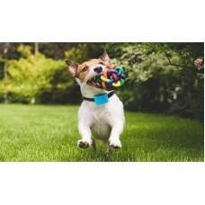 Antkaklis nuo lojimo mažiems šunims